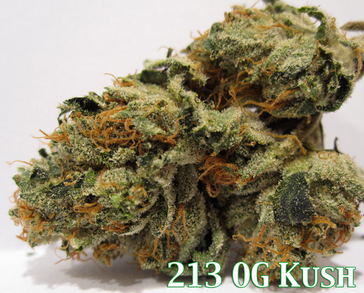 213 OG Kush Medical Marijuana