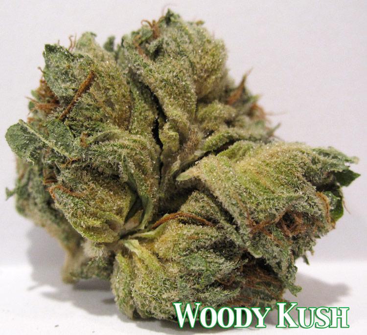 Woody Kush