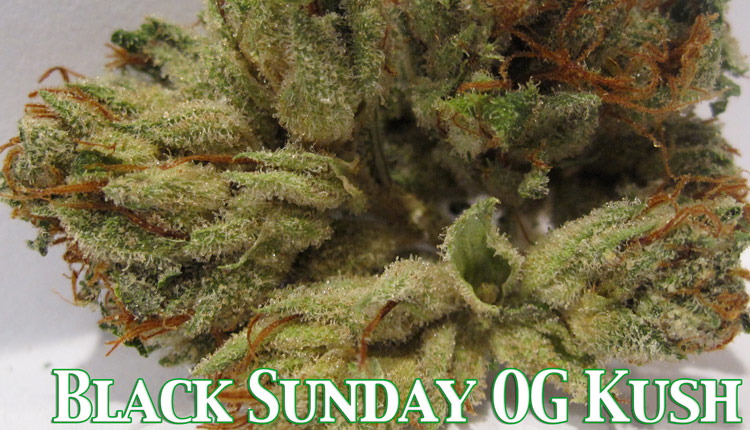 Black Sunday OG Kush