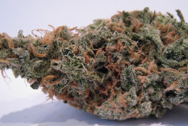 Blue Dreams Medical Marijuana