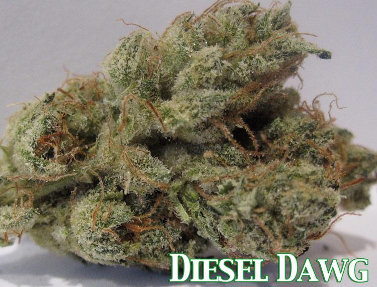 Diesel Dawg