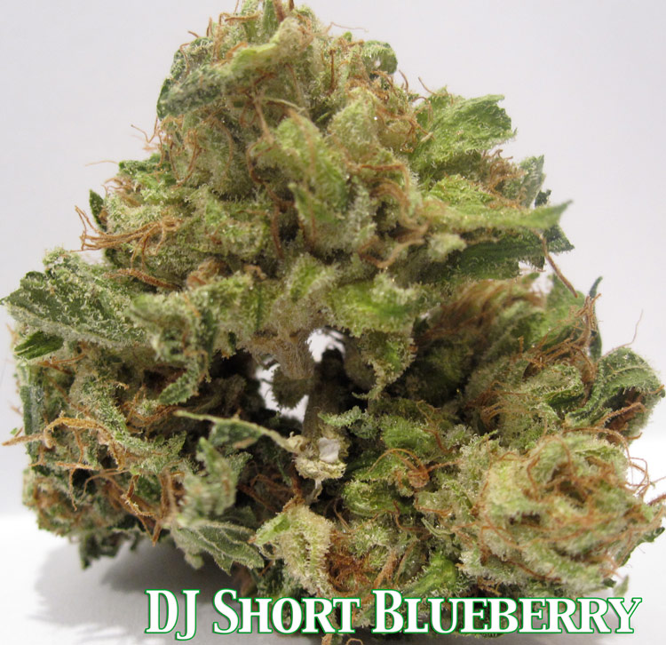 DJ Short Blueberry