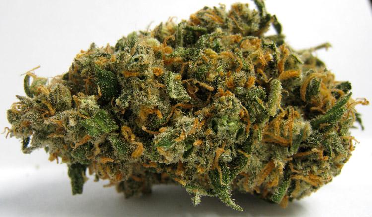 Exclusive Green Crack Weed
