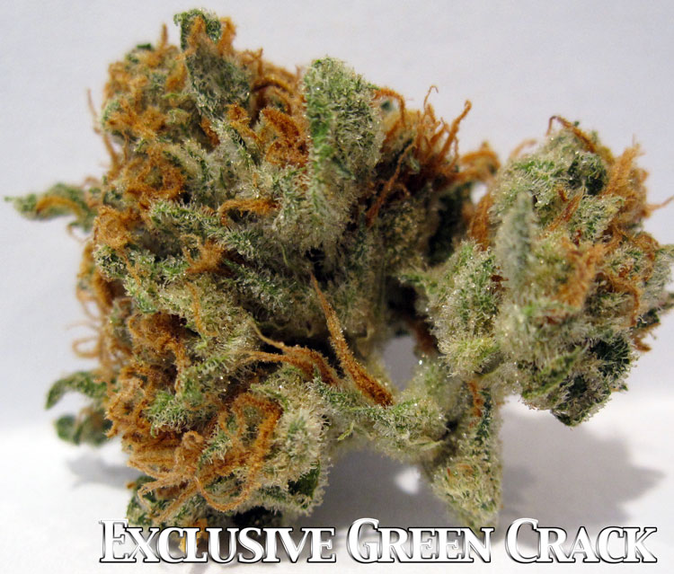 Green Crack Medical Marijuana Picture