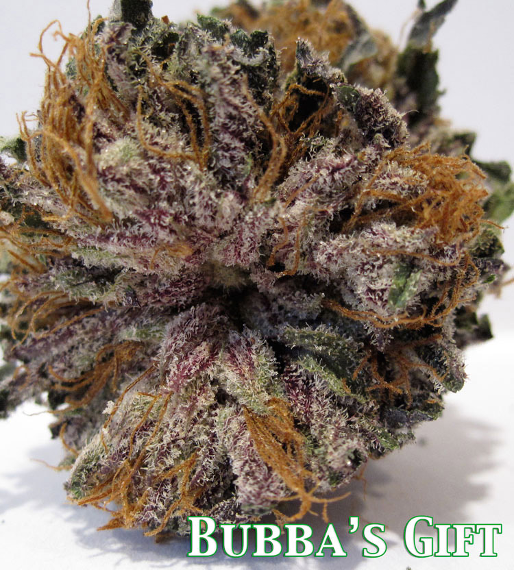 bubba kush x gods gift purple