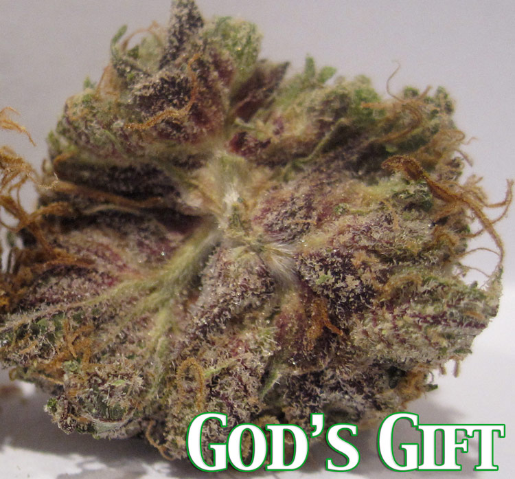 God's Gift Bud http://fadedfools.com/category/gods-gift/