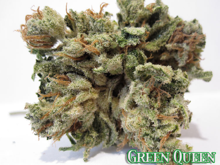 Green Queen (Green Crack Cross)