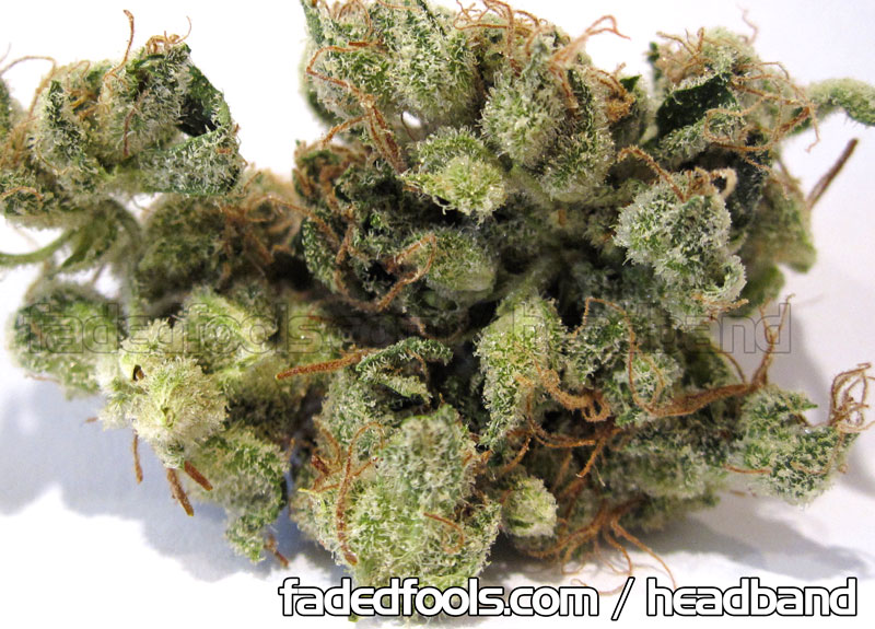 Headband Weed Marijuana
