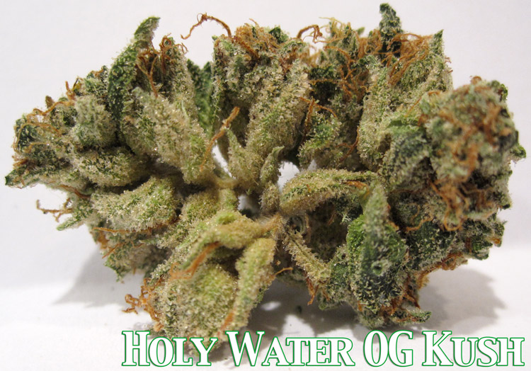 Holy Water OG Kush