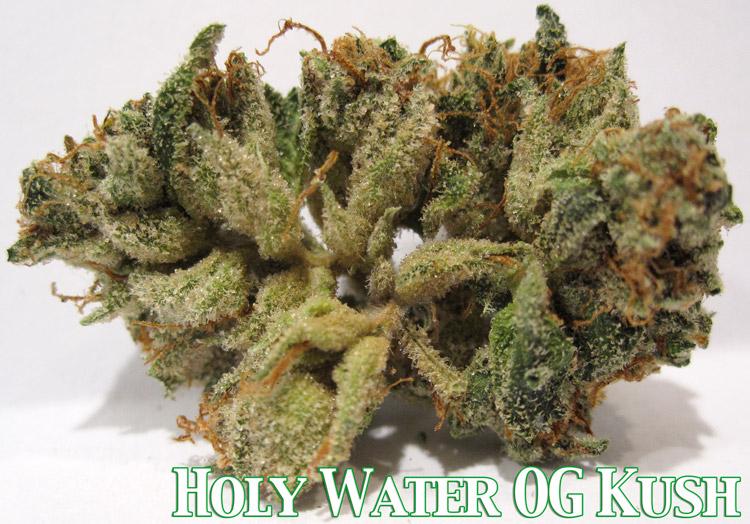 Holy Water OG Kush