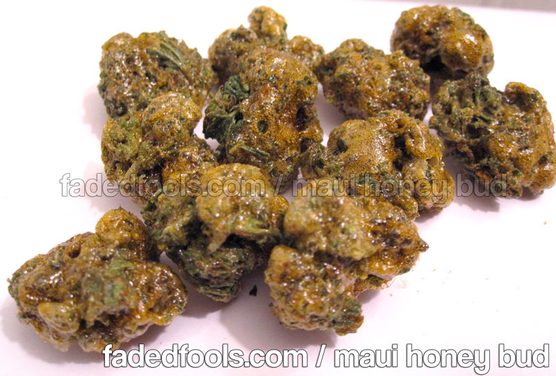 Honey Bud Hash Oil Concentrate