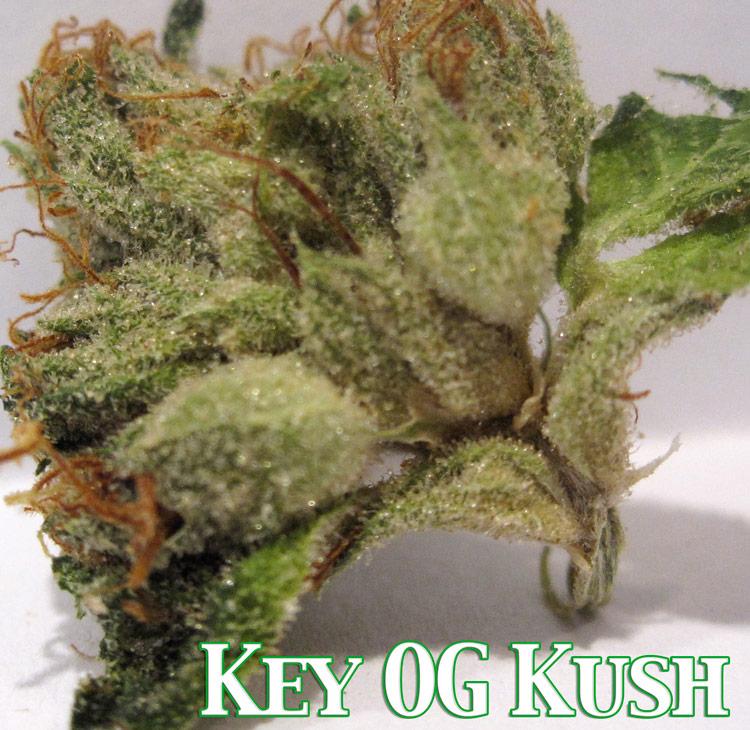 Key OG Kush Medical Marijuana