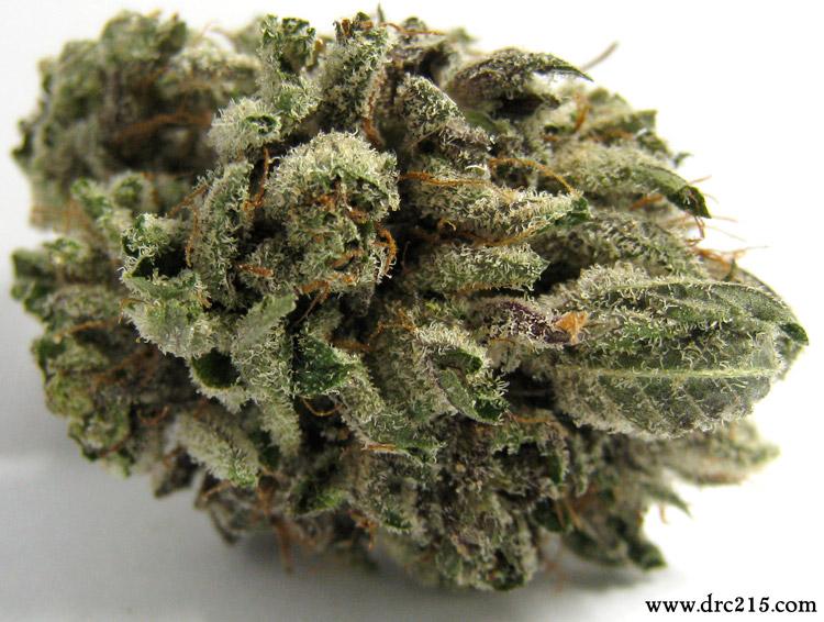 LA Confidential Medical Marijuana