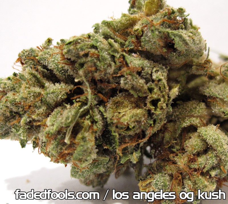 Los Angeles OG Kush - nov 2010