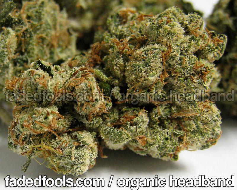 Organic Headband Weed Strain