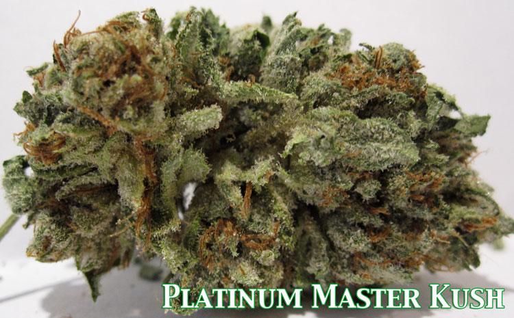 Platinum Master Kush