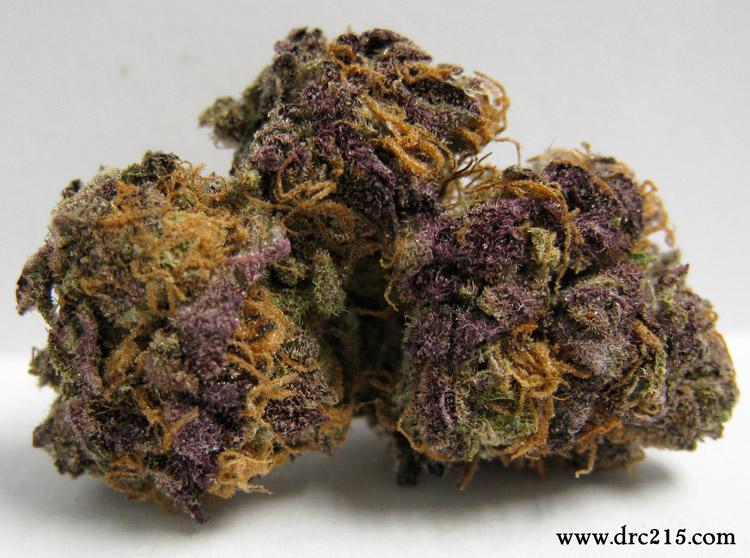 Primetime Purple Erkle
