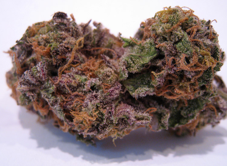 Primetime GDP (Grand Daddy Purple)