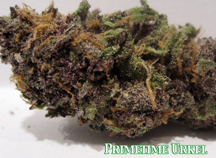 Primetime Purple Urkel