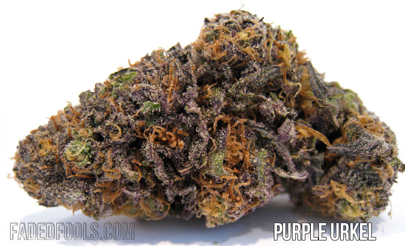 Purple Urkel Strain Picture and Review