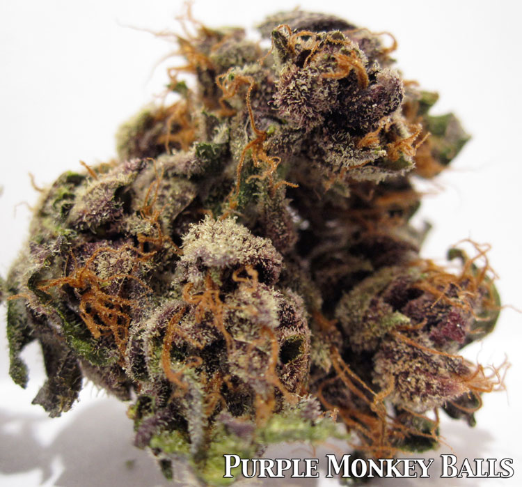 Purple Monkey Balls Medical Marijunana