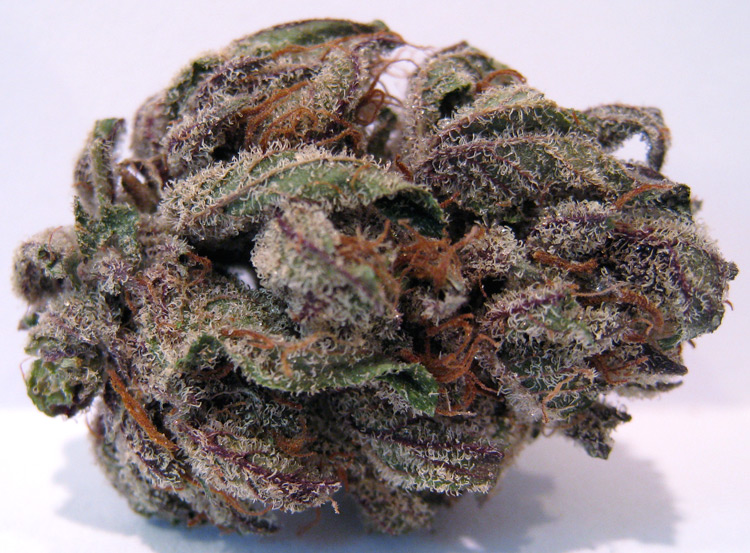 Purple Bubba Kush - Humboldt County Grown