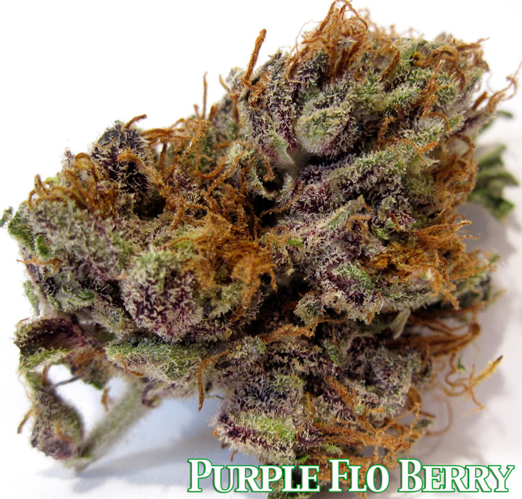 Purple Flo-Berry
