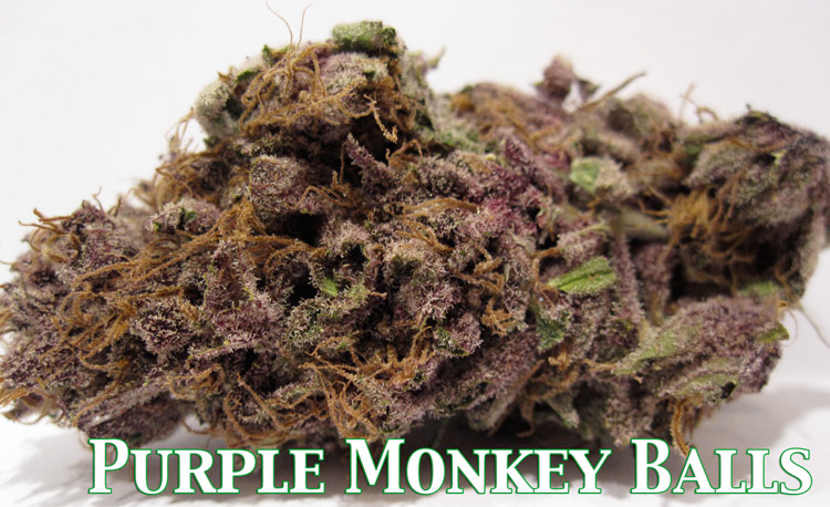 Purple Monkey Balls Medical Marijuana