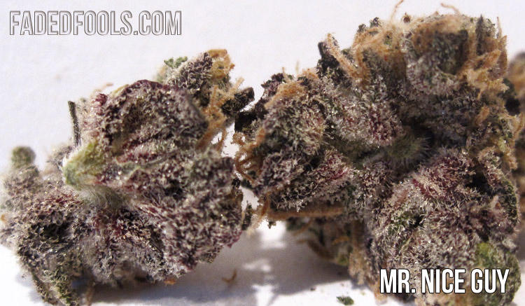 Mr Nice Guy Weed