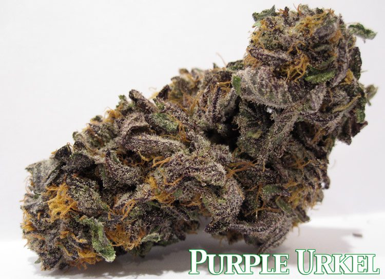 Purple Urkel Marijuana Picture
