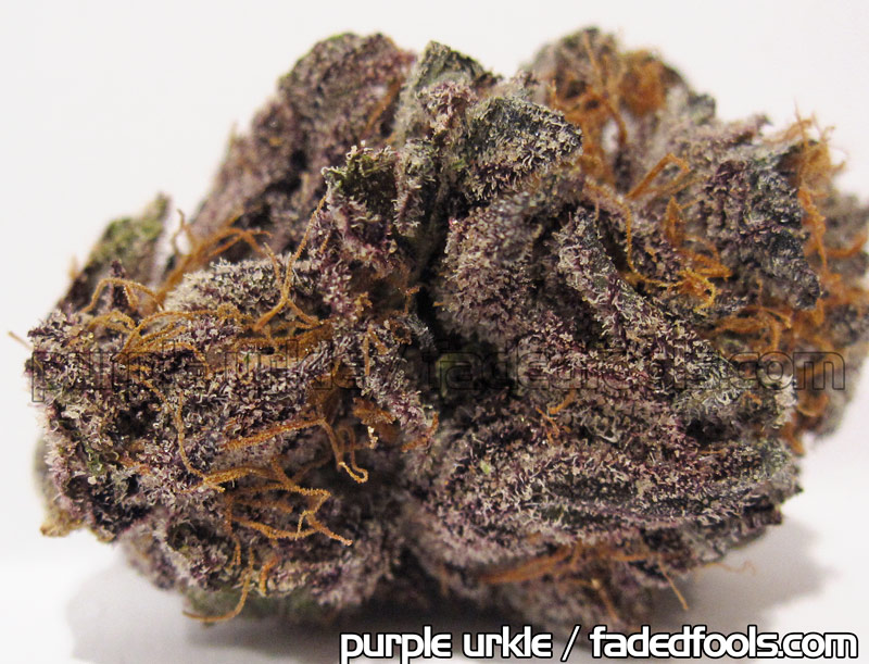 Purple Urkel Medical Marijuana