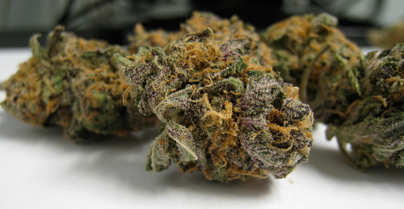 Purple Urkle Medical Marijuana