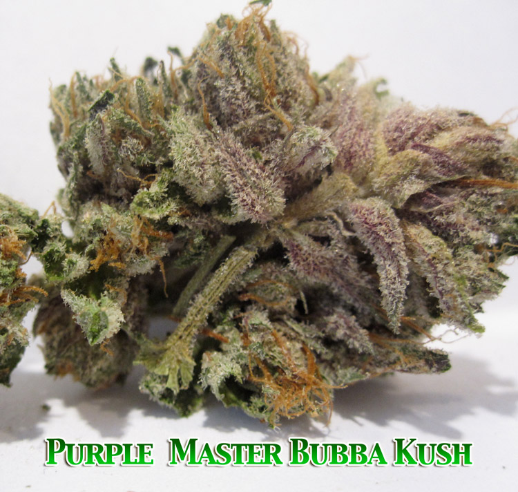 Purple Master Bubba Kush
