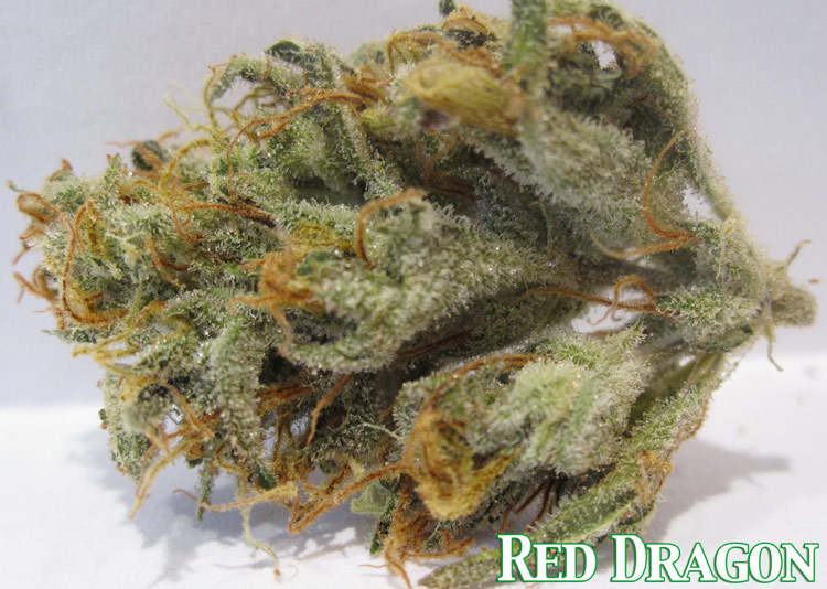 Red Dragon Medical Marijuana