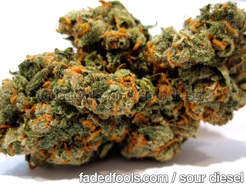 Sour Diesel Medical Marijuana