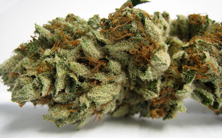 Sour Master Kush Medical Marijuana
