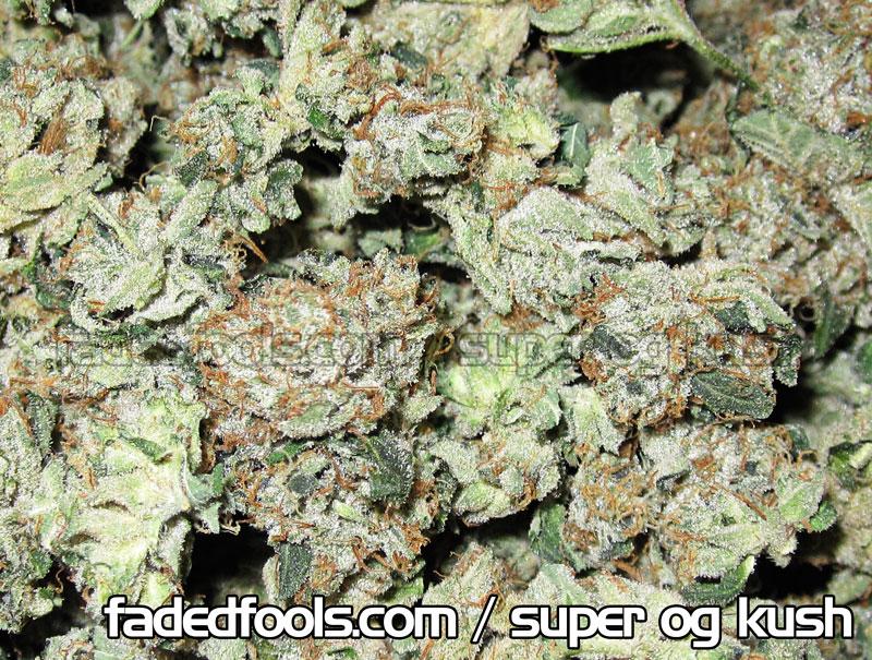 Super OG Kush