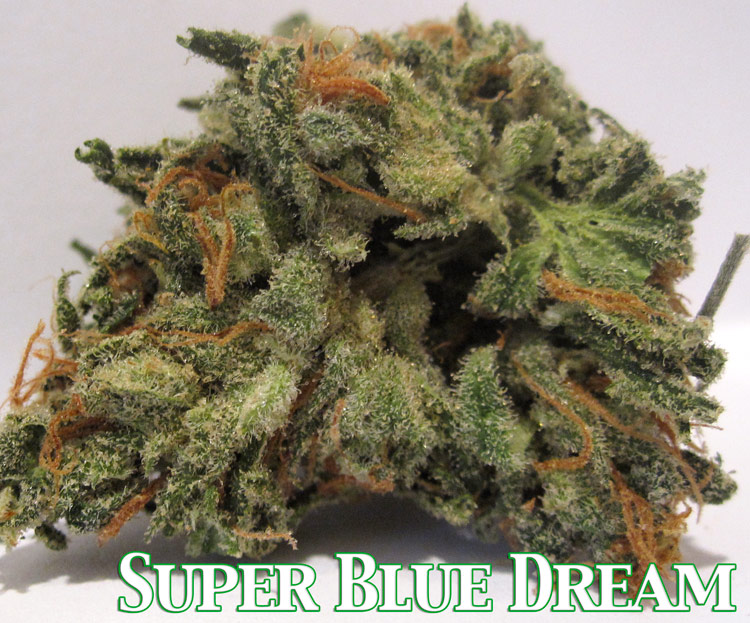 Super Blue Dream Medical Marijuana