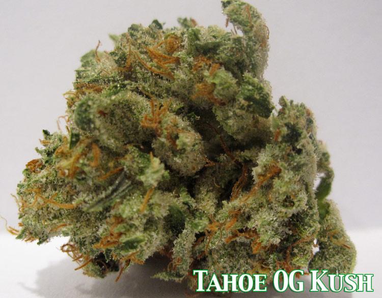 Tahoe OG Kush