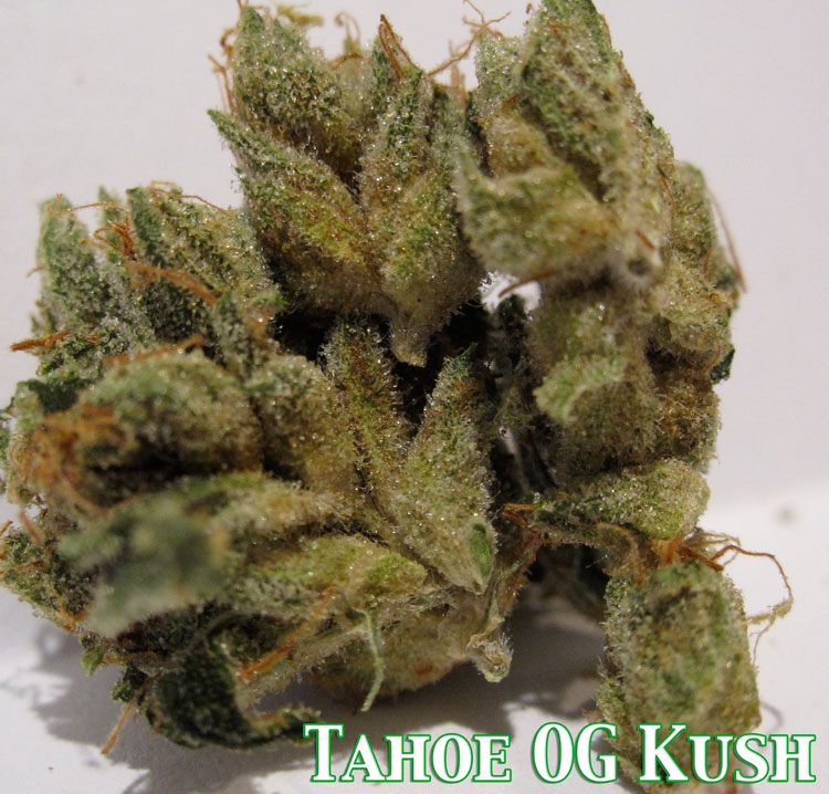 Tahoe OG Kush - Medical Marijuana